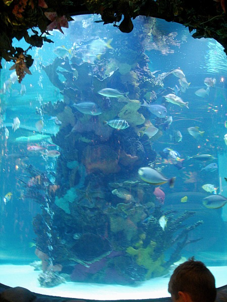 Age Aquarium Good Mountain Press Presents Digestworld Issue 166 For